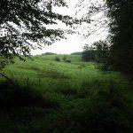 EH Fotos 2016.06 01 150x150 - Der Ort Ernsthofen