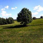 2020.07 Linda 07 150x150 - Impressionen aus Ernsthofen